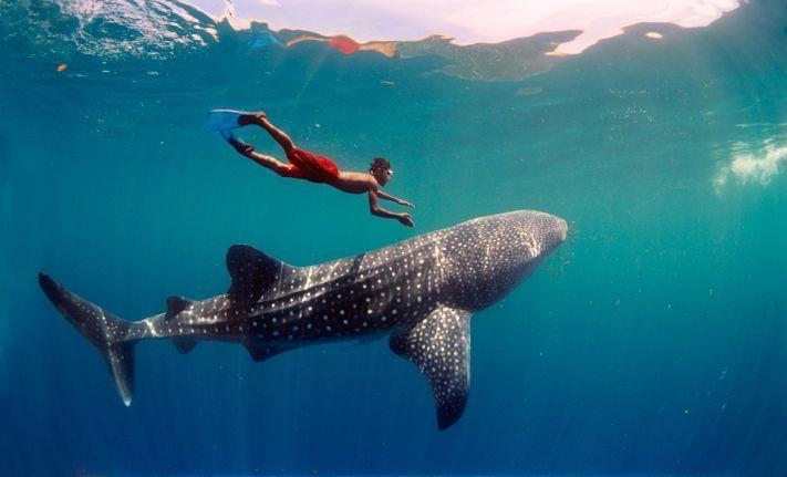 du lịch biển ở Philippines xem cá mập tại Oslob