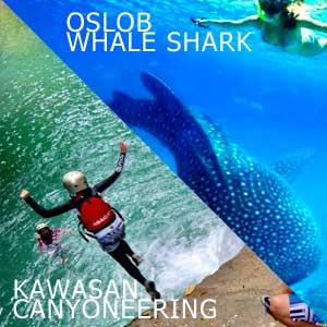 Tour Oslob xem cá mập không thể bỏ qua ở Cebu