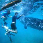 tour oslob xem cá mập ở cebu