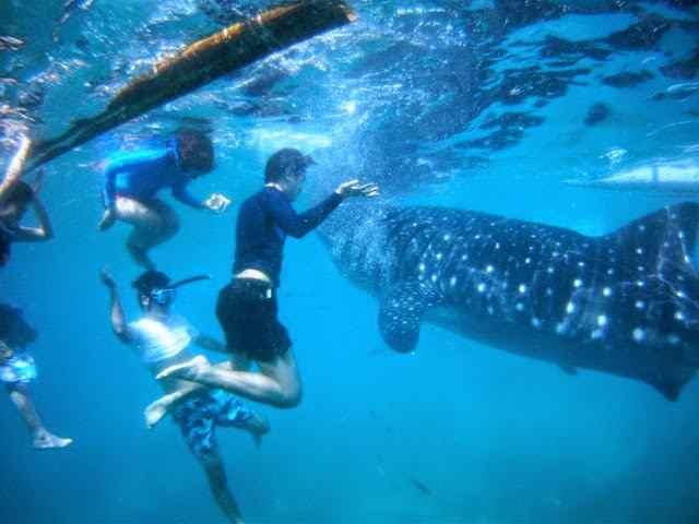 tour lặn biển đảo Cebu